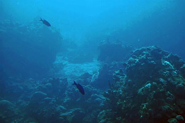 031 0007 Atlantis Diving