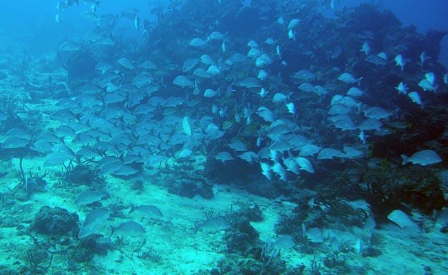 032 00014 School of Fish