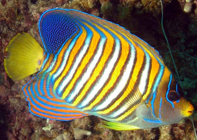 034 00021a One of Few Colorful Fish