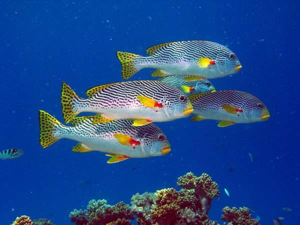 035 00021b School of Colorful Fish